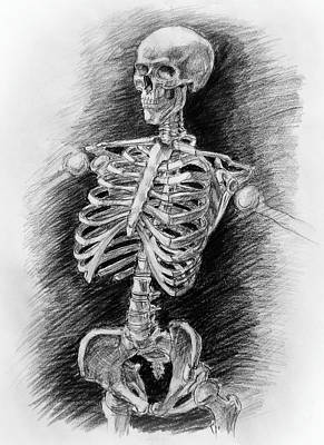 Human Skeleton Drawing - Anatomy Study Mister Skeleton by Irina Sztukowski