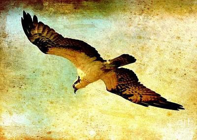 Osprey Photograph - Ancient Hunter by Carol Groenen
