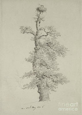 Stork Drawing - Ancient Oak Tree With A Storks Nest by Caspar David Friedrich