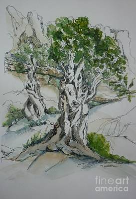 Ancient Drawing - Ancient Olive Grove by Therese Alcorn