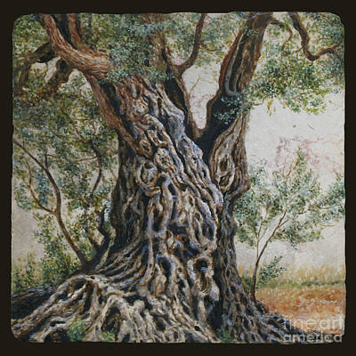 Ancient Olive Tree Trunk Print by Miki Karni