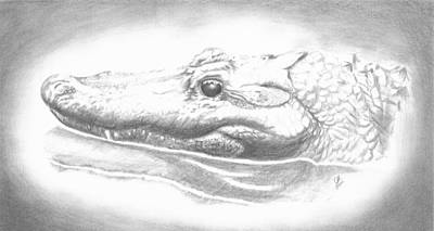 Alligator Drawing - Ancient Refelections by Leanne Blackwell