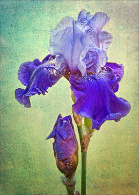 Irises Digital Art - And One To Come by Nikolyn McDonald