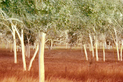 Gums Photograph - And The Trees Danced by Holly Kempe