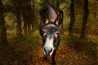 Donkey Photograph - And You Are  ??? by Donna Kennedy