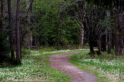 Thimbleweed Photograph - Anemone Path by Torbjorn Swenelius