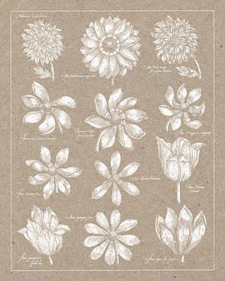 Chart Painting - Anemone Plate II by Wild Apple Portfolio