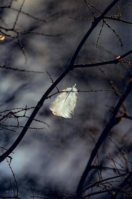 Angel Feather Print by Bob Orsillo