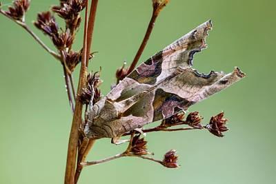 Angle Shades Moth Print by Heath Mcdonald