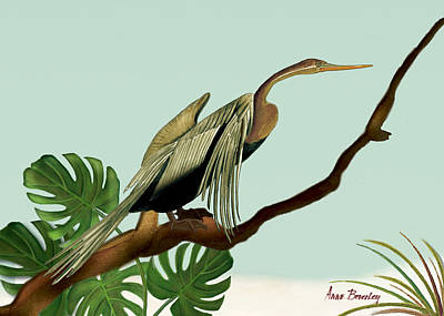 Anhinga Painting - Anhinga Bird by Anne Beverley-Stamps