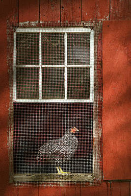 Animal - Bird - Chicken In A Window Print by Mike Savad