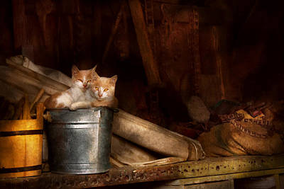 Animal - Cat - Bucket Of Fun  Print by Mike Savad