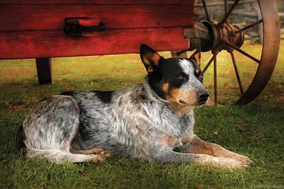 Animal - Dog - Always Faithful Print by Mike Savad