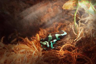 Animal - Frog - Lick The Green Frog Print by Mike Savad