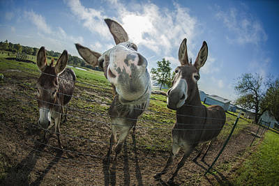 Animal Personalities Overly Curious Happy Donkey Print by Jani Bryson