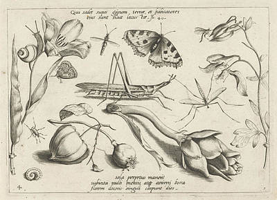 Artichoke Drawing - Animals And Plants Around A Grasshopper And A Artishock by Jacob Hoefnagel And Joris Hoefnagel