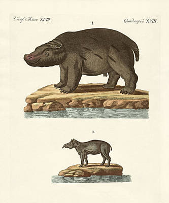 Hippopotamus Drawing - Animals From Hot Countries by Splendid Art Prints