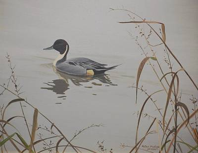 Ankeny Pintail Print by Peter Mathios
