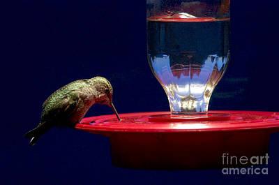 Annas Hummingbird At Feeder Print by Sharon Talson