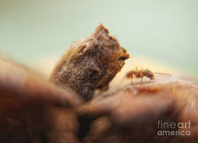 Macro Photograph - Ant by Justyna JBJart