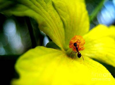Ant Photograph - Ant On The Flower by Surendra Silva