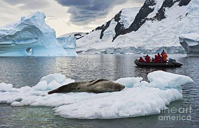 Antarctic Serenity... Print by Nina Stavlund