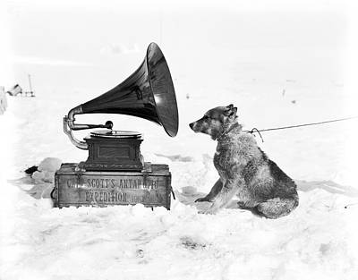 Antarctic Sled Dog And Gramophone Print by Scott Polar Research Institute