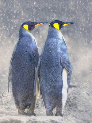 Swallowtail Photograph - Antarctic To The Right? by Joachim G Pinkawa