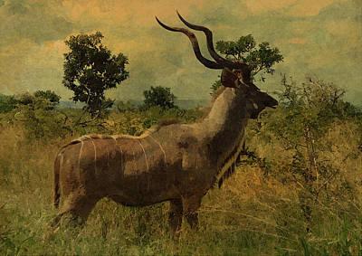 Ericamaxine Photograph - Antelope by EricaMaxine  Price