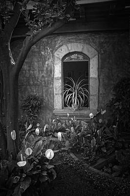 Lily Photograph - Antigua Window by Tom Bell