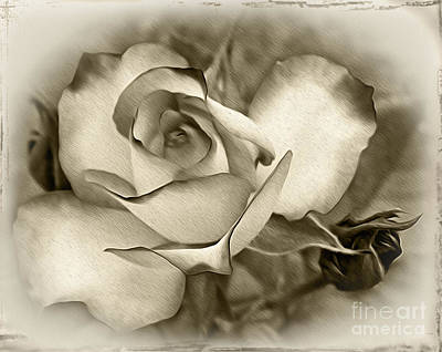 Sepia Flowers Photograph - Antique Rose by Kaye Menner