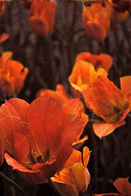 Closeup Print featuring the photograph Antiqued Tulips by Michelle Calkins