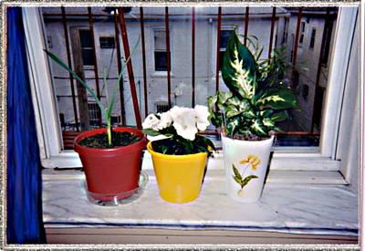 Apartment Life Original by Desline Vitto