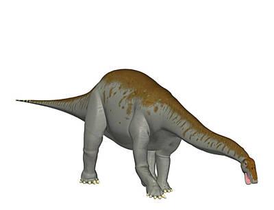 Paleozoology Photograph - Apatosaurus Dinosaur by Friedrich Saurer