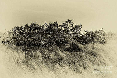 Apollo Beach Grass Print by Marvin Spates