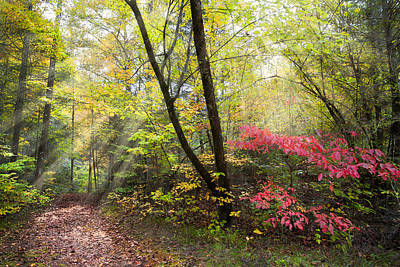 Dogwood Photograph - Appalachian Mountain Trail by Debra and Dave Vanderlaan