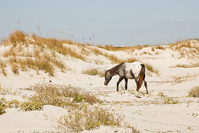 Appaloosa Beach Print by Barbara Kraus - Northrup