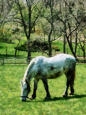 Stall Photograph - Appaloosa In Pasture by Susan Savad