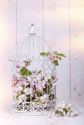 Bird Cage Photograph - Apple Blossom by Amanda And Christopher Elwell