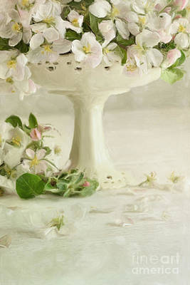 Macro Digital Art - Apple Blossom Flowers In Vase On Table/digital Painting  by Sandra Cunningham