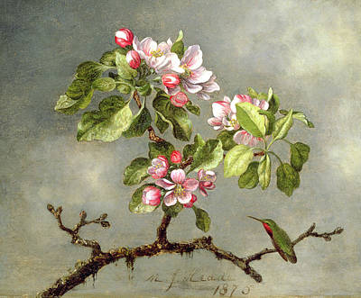 In Bloom Painting - Apple Blossoms And A Hummingbird by Martin Johnson Heade