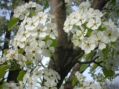 Apple Blossoms Print by Randi Shenkman