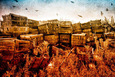 Maine Photograph - Apple Crates And Crows by Bob Orsillo