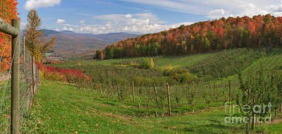 Barn Photograph - Apple Orchard Panorama by Charles Kozierok
