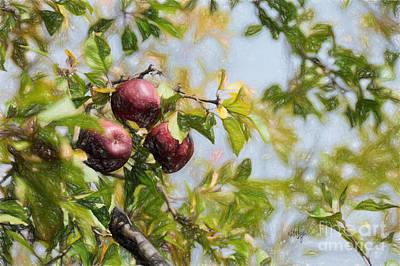 Apple Pickin' Time Print by Lois Bryan