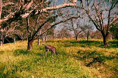Apple Trees In Feburary Print by John K Woodruff