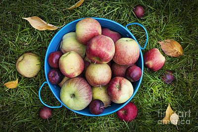 Ripe Photograph - Apples by Elena Elisseeva