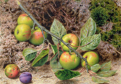 Victoria Painting - Apples On A Branch by John Sherrin