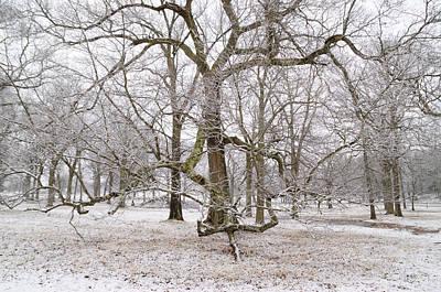 Appleton Photograph - Appleton Trees With Snow by David Stone