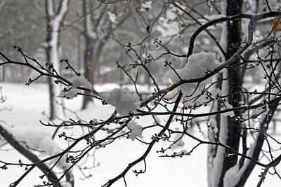 April Snow Print by Kay Novy